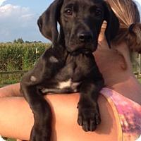 Adopt A Pet :: Beth - Medora, IN