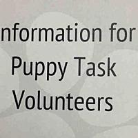 Hound (Unknown Type) Mix Dog for adoption in Raleigh, North Carolina - ZZ PUPPY-YES