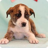 Adopt A Pet :: Ulmer - Waldorf, MD