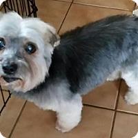 Adopt A Pet :: Happy - N. Babylon, NY