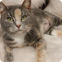 Adopt A Pet :: Isabelle - Hockessin, DE