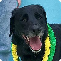 Adopt A Pet :: Baxter - Evansville, IN