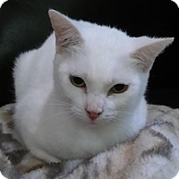 Adopt A Pet :: Winkin - Witter, AR