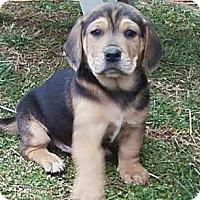 Adopt A Pet :: Murphy - South Jersey, NJ