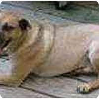 Adopt A Pet :: Chico - Bethesda, MD
