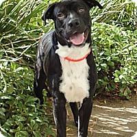Adopt A Pet :: Jonas - Mission Viejo, CA