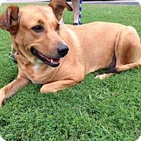 Adopt A Pet :: Henley - Homewood, AL