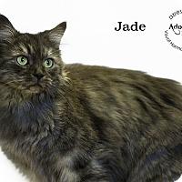 Adopt A Pet :: Jade - Phoenix, AZ