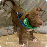 Adopt A Pet :: Orion - East Hartford, CT