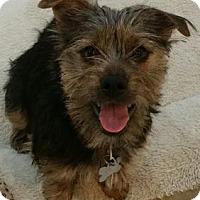 Adopt A Pet :: Beau - Richmond, VA