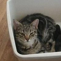 Adopt A Pet :: Ruby - Bronson, FL