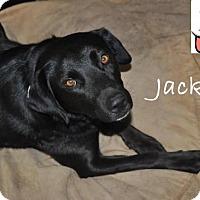 Adopt A Pet :: Jackie - Clovis, CA