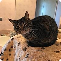 Adopt A Pet :: Clyde - China, MI