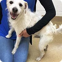 Adopt A Pet :: Gabriel - Miami, FL