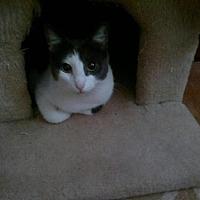 Adopt A Pet :: Piper - Decatur, GA