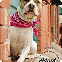 Adopt A Pet :: Rylee - Lincoln, NE