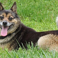 Adopt A Pet :: Coco - Joplin, MO