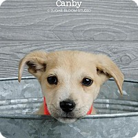 Adopt A Pet :: Canby - Denver, CO
