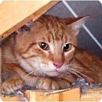 Adopt A Pet :: Fred - Summerville, SC