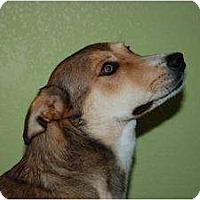 Adopt A Pet :: Jesse - Alliance, NE