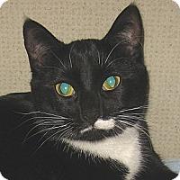 Adopt A Pet :: L.B. - 2013 - Hamilton, NJ