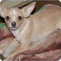 Adopt A Pet :: Bambi - Rigaud, QC