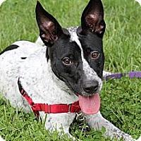Adopt A Pet :: Crash - Hastings, NY