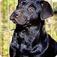 Adopt A Pet :: Ozzy - Albany, NY