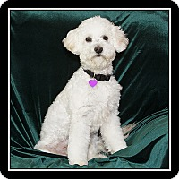 Adopt A Pet :: Tommy - Covina, CA