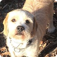 Adopt A Pet :: Edmund - Oak Ridge, NJ
