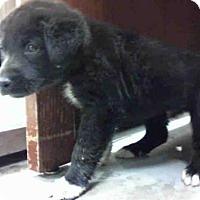 Adopt A Pet :: A284154 - Conroe, TX