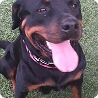 Adopt A Pet :: Kuala - Gilbert, AZ