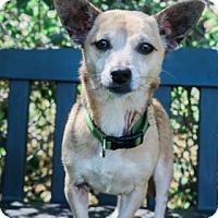 Adopt A Pet :: Pretty girl - Lakeland, FL