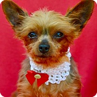 Adopt A Pet :: Diva - Irvine, CA