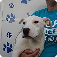 Adopt A Pet :: Xima - Oviedo, FL