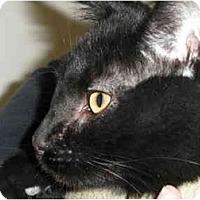Adopt A Pet :: Binx - Milwaukee, WI