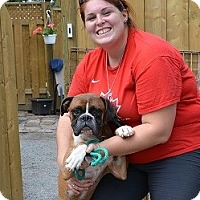 Adopt A Pet :: Dalton - Hamilton, ON