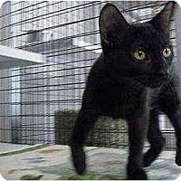 Adopt A Pet :: Jetta - Deerfield Beach, FL