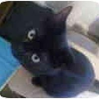 Adopt A Pet :: Vixen and Foxy - Proctor, MN