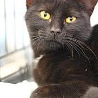 Adopt A Pet :: Miri - Yukon, OK