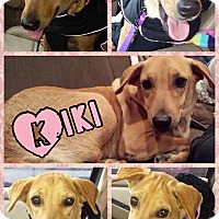 Adopt A Pet :: Kiki - East Rockaway, NY
