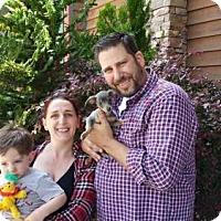 Adopt A Pet :: Jilly - Sacramento, CA
