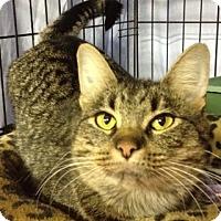 Adopt A Pet :: Mama Gato - Byron Center, MI