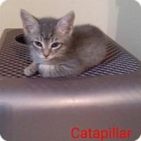 Adopt A Pet :: Caterpillar - McDonough, GA