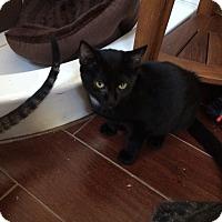 Adopt A Pet :: Noe - San Ramon, CA