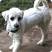 Adopt A Pet :: Chilton - MEET ME - Norwalk, CT