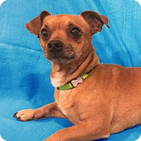 Adopt A Pet :: Pecan Pie - San Francisco, CA
