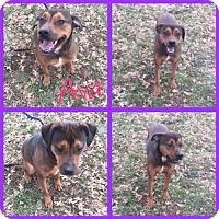 Adopt A Pet :: Ava - Alvarado, TX
