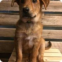 Adopt A Pet :: Sherwood - Pitt Meadows, BC