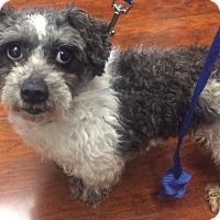 Adopt A Pet :: Jeremy - Oak Ridge, NJ